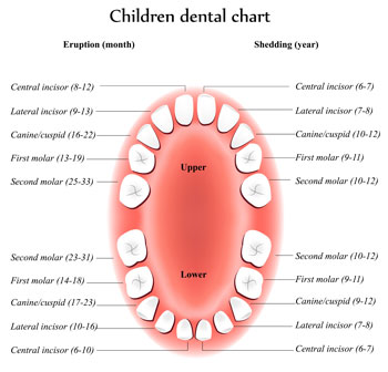 Tooth Eruption Chart - Pediatric Dentist in Alpharetta and Suwanee, GA